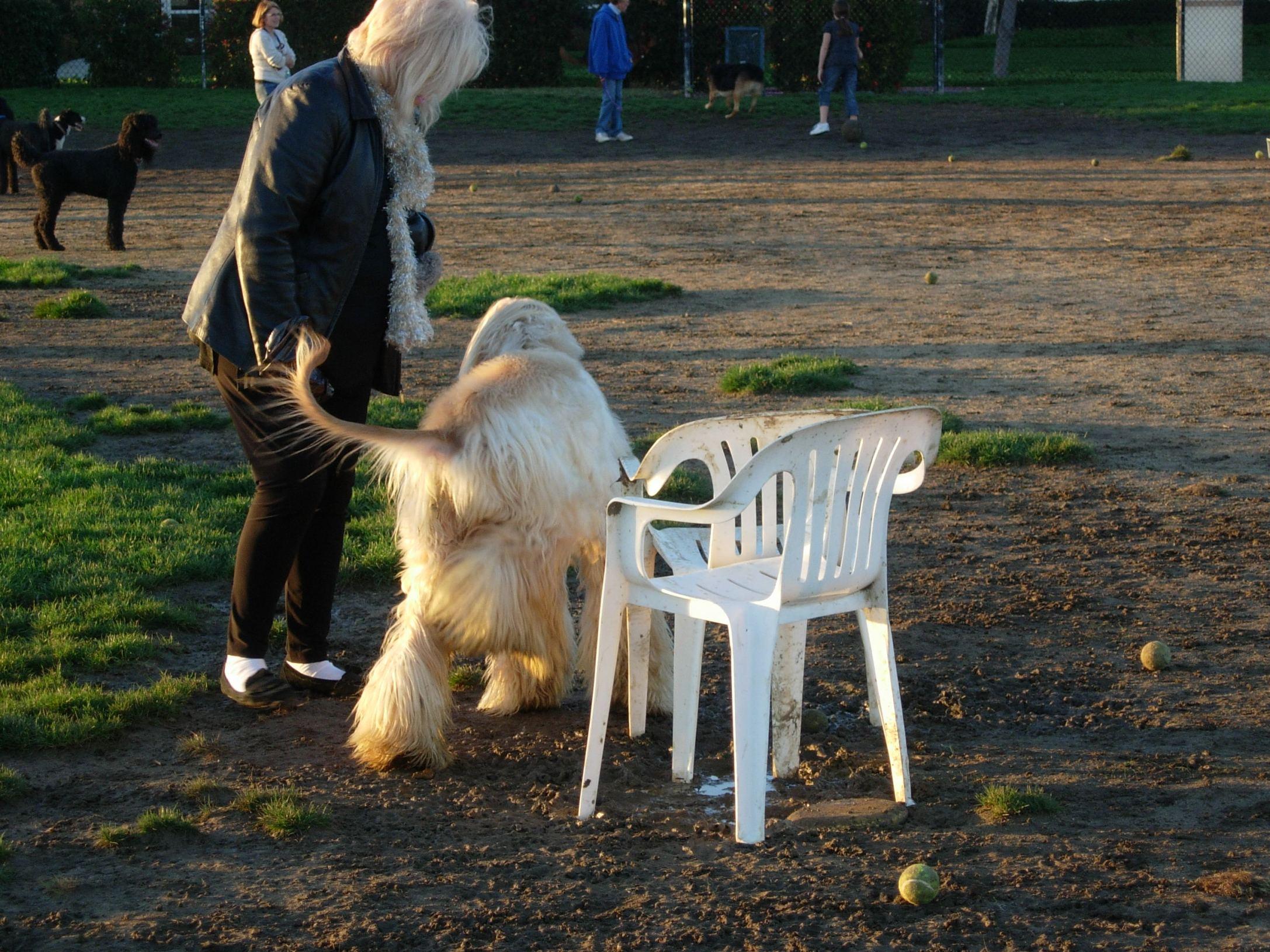 shores-dog-park-014.jpg